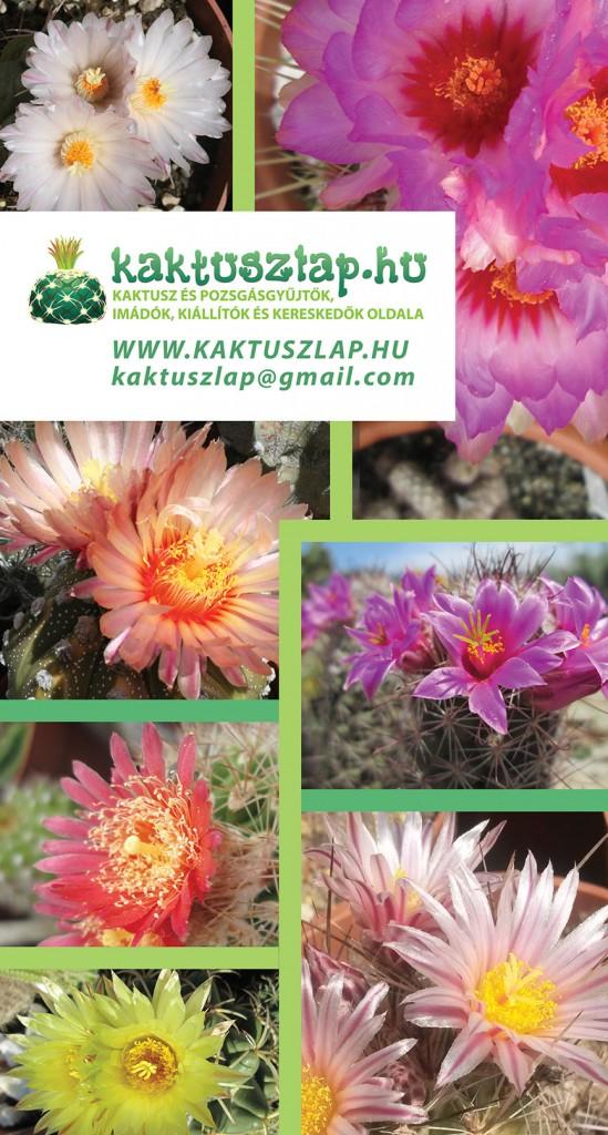 140526_kaktuszlap_banner_220_410
